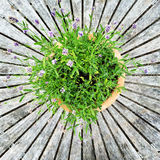 Blooming plant on old wooden table Stock Photo