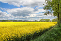 Blooming plants in the field. Flowering plants in a field with cloudy sky Stock Image