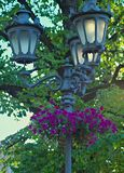 Blooming plants in flowerbeds hanging on lightning pillar.  royalty free stock images