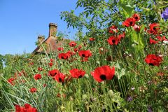 Blooming plants, Ladybird in Great Dixter House & Gardens. stock image