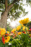 Blooming Plants In The Summer Sun Stock Photography