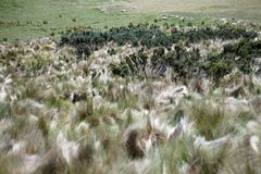 Blooming plants on the paramo Stock Image