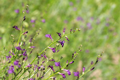 Blooming plants in the steppe Stock Image