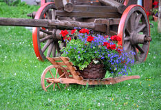 Blooming plants and wooden wheelbarrow Stock Photos