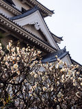 Blooming plum tree and castle tower Royalty Free Stock Image