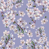 Blooming plum, watercolor Royalty Free Stock Images