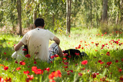 Blooming poppies dad with daughter Anemones blossom in Israel. Dad with daughter Anemones blossom in Israel Stock Image