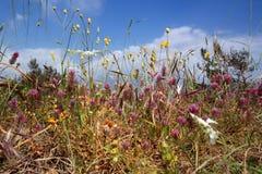 Blooming prairie. Brightly blooming meadow in May Royalty Free Stock Image