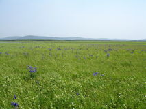 Blooming prairie Royalty Free Stock Photos