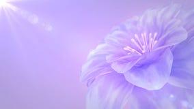 Blooming purple flower stock video