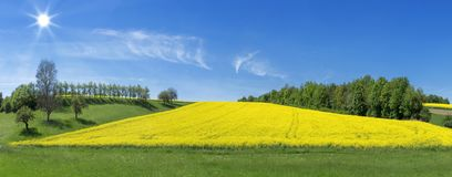 Blooming field surrounded by rows of trees. Yellow blooming field surrounded by meadows and rows of trees in the sunshine stock photography