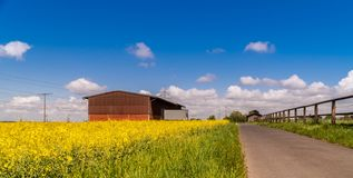 Blooming rapes field under the blue sky. Spring. royalty free stock image