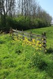Blooming rapeseed before the closed wooden fence in the grassland in the beautiful spring. stock photos