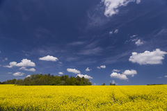 Blooming rapeseed fields Royalty Free Stock Photography