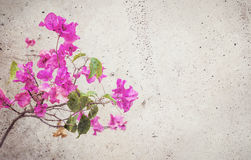 Blooming red flower blended into concrete wall Stock Images