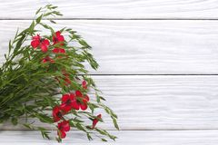 Blooming red linen with green leaves on the wooden Stock Photography