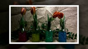 Blooming red tulips flower buds. Timelapse; with move stock video footage
