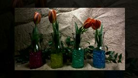 Blooming red tulips flower buds. Timelapse; with move stock footage
