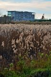 Blooming reed and building onder construction Stock Photography