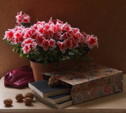Blooming Rhododendron and Books Royalty Free Stock Images