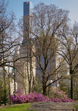 Blooming Rhododendrons in Spring, Central Park, New York Stock Photo