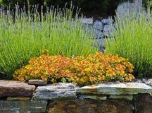Blooming rock garden Stock Images
