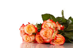 Blooming roses Stock Photo