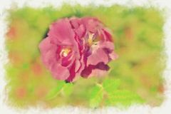 Blooming roses. In the park- natural landscape. Summer day Royalty Free Stock Image