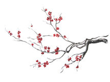 Blooming sakura branch. Stock Photo