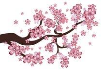Blooming Sakura Branch Royalty Free Stock Images