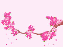 Blooming Sakura branch over light pink Royalty Free Stock Photography