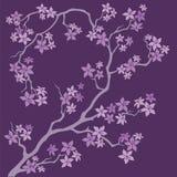 Blooming of sakura branch on purple background. Blooming of sakura branch on a purple background. Vector illustration Stock Photo