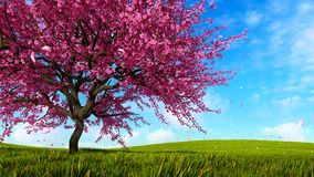 Blooming sakura cherry tree on green grass hills. Lush blooming sakura cherry tree with pink flower petals falling in slow motion against bright blue sky and stock illustration