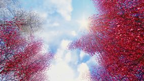 Blooming sakura falling petals and sunny sky vector illustration