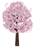 Blooming Sakura Tree Royalty Free Stock Photo