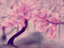 Blooming Sakura Trees Stock Photography