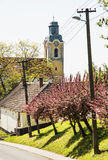Blooming sakura trees and old church, seasonal scene Stock Photos