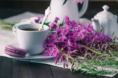blooming Sally  and  cup of tea. Stock Photos