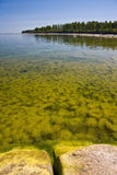 Blooming sea. A photo of blooming sea on a bright day, forest on the background Stock Photos