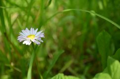 Flower in the grass stock photo