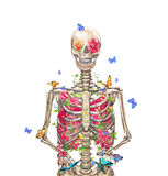 Blooming skeleton on  background Royalty Free Stock Images