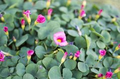Blooming small flowers with green leaves in nursery Stock Images