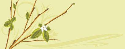 Blooming sprig on the abstract background Stock Images
