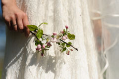 Blooming sprig of apple in hand. Hand of woman holds blooming sprig of apple on background of wedding white dress in sunny spring day Stock Image
