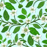 White Flowers on Twig Seamless Pattern Royalty Free Stock Photos