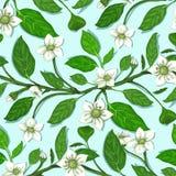 White Flowers on Twig Seamless Pattern Royalty Free Stock Photos