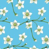 White Flowers on Twig Seamless Pattern Stock Photo