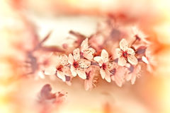 Blooming in spring Royalty Free Stock Images