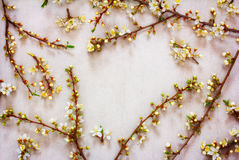 Blooming spring branches of a fruit tree with white flowers on a pink background with space for text Stock Image