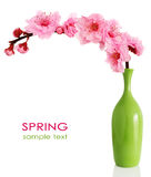 Blooming Spring Cherry Branch In Vase Royalty Free Stock Photos